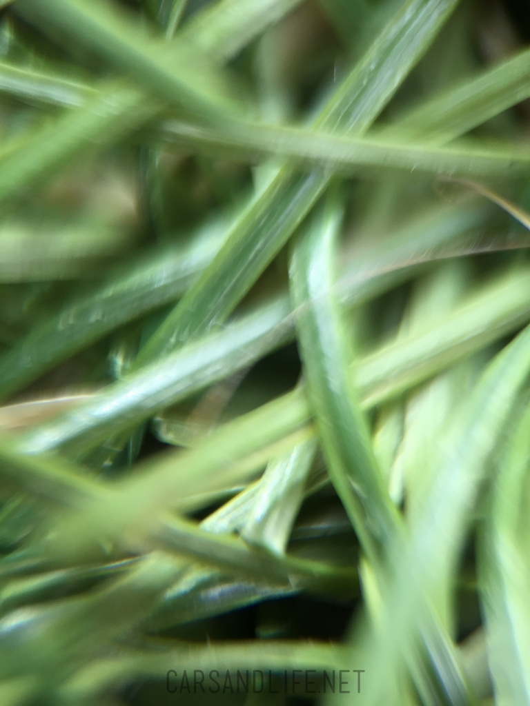 olloclip iphone 6 macro lense 42